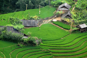 Vietnam to honour Sapa's terraced fields
